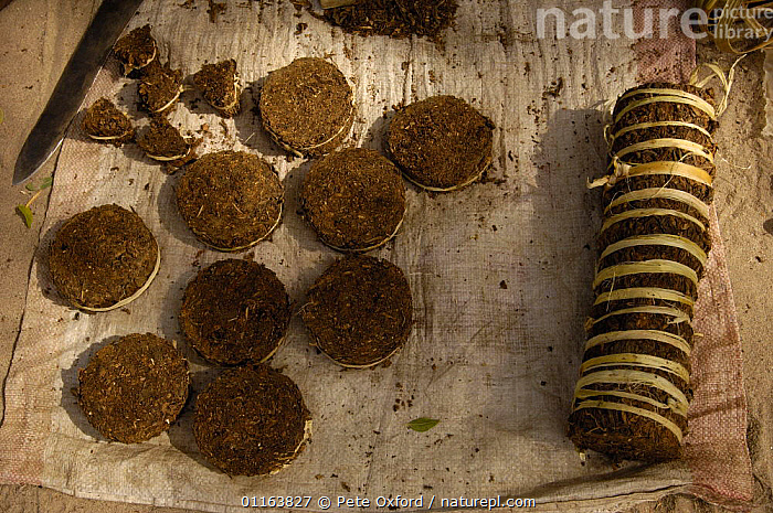 Tabacco for sale at Mahafaly market. Near Betioky in South-western MADAGASCAR.  ,  MADAGASCAR,TRADE,TRADITIONAL  ,  Pete Oxford