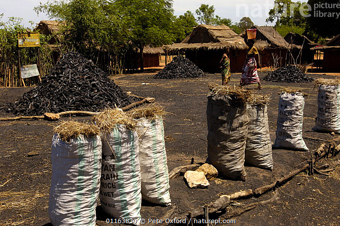 Charcoal sellers in threatened habitat of arid spiny forest. South of Tulear. South-western MADAGASCAR.  2005  ,  DEFORESTATION,LANDSCAPES,MADAGASCAR,PEOPLE,TRADE,TRADITIONAL  ,  Pete Oxford