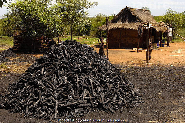 Charcoal sellers in threatened habitat of arid spiny forest. South of Tulear. South-western MADAGASCAR.  2005  ,  DEFORESTATION,MADAGASCAR,PEOPLE,TRADE,TRADITIONAL  ,  Pete Oxford