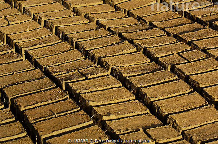 Wet bricks  laid out in sun to dry. Antananarivo city, MADAGASCAR  ,  BUILDINGS,MADAGASCAR,PATTERNS,TRADITIONAL  ,  Pete Oxford