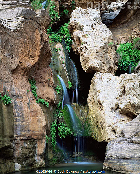 Elves Chasm, Grand Canyon NP, Arizona, USA with hanging garden of Maidenhair ferns {Adiantum capillus-veneris} and Monkey flowers.  ,  LANDSCAPES,NORTH AMERICA,PLANTS,RESERVE,RIVERS,USA,VERTICAL,WATERFALLS  ,  Jack Dykinga
