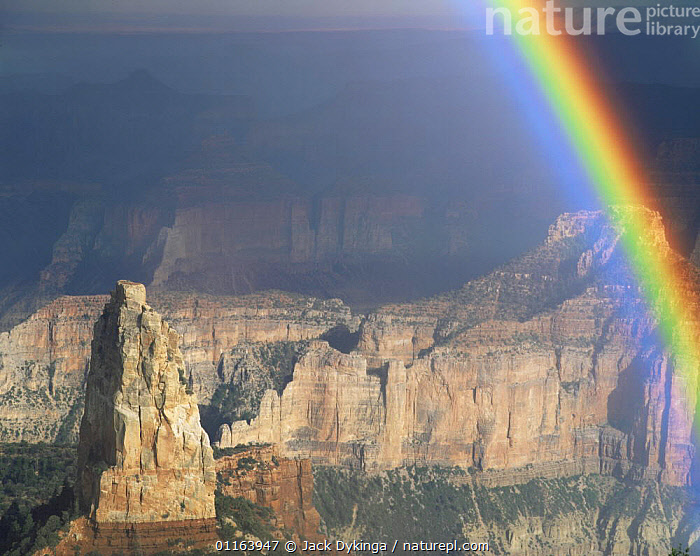 View of Mt Hayden from Point Imperial, North Rim, Grand Canyon NP, Arizona, USA in afternoon light with rainbow and storm clouds  ,  CLIFFS,LANDSCAPES,NORTH AMERICA,NP,RAINBOWS,RESERVE,STORMS,USA,Weather,Geology,National Park  ,  Jack Dykinga