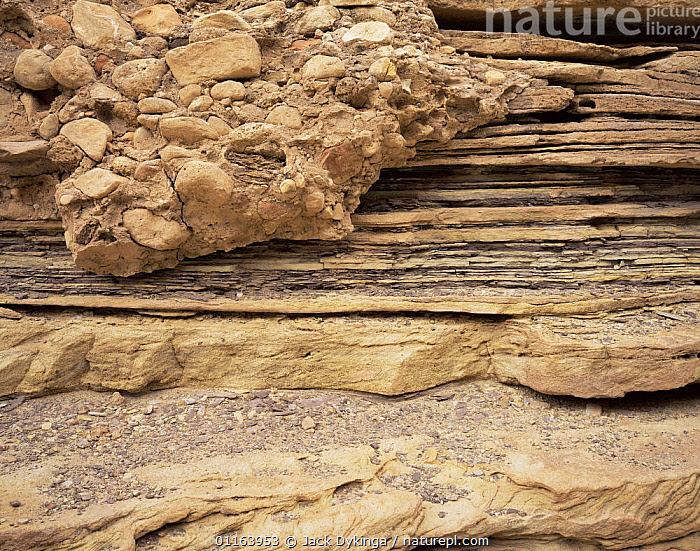 Conglomerate rocks stick to banded sandstone shoreline of the Little Colorado River, Grand Canyon NP, Arizona, USA  ,  CLIFFS,CLOSE UPS,LANDSCAPES,NORTH AMERICA,RESERVE,ROCK FORMATIONS,STRIATIONS,USA,Geology  ,  Jack Dykinga