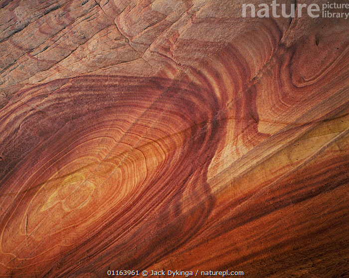 Petrified sand dunes with eroded sandstone bands in swirl patterns from mineral deposits, Paria Canyon-Vermilion Cliffs Wilderness, Arizona, USA  ,  ARTY,EROSION,LANDSCAPES,MINERALS,NORTH AMERICA,PATTERNS,RESERVE,ROCK FORMATIONS,STRIATIONS,USA,Geology  ,  Jack Dykinga