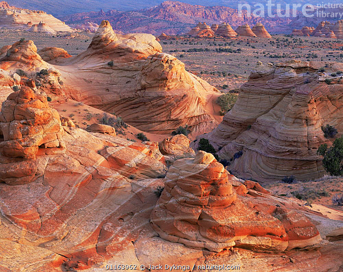 Petrified sand dunes with eroded sandstone at sunset, Paria Canyon-Vermilion Cliffs Wilderness, Arizona, USA  ,  EROSION,LANDSCAPES,NORTH AMERICA,RESERVE,ROCK FORMATIONS,STRIATIONS,USA,Geology,Catalogue1  ,  Jack Dykinga