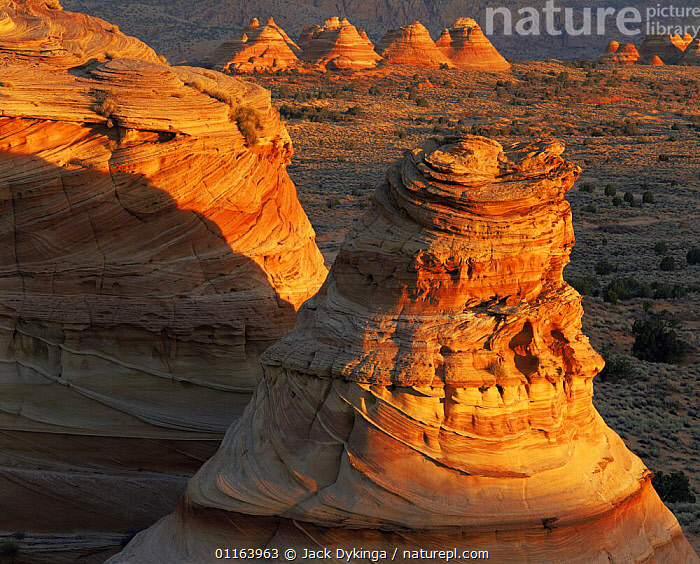 Petrified sand dunes with eroded sandstone striations at sunset, Paria Canyon-Vermilion Cliffs Wilderness, Arizona, USA  ,  EROSION,LANDSCAPES,NORTH AMERICA,RESERVE,ROCK FORMATIONS,STRIATIONS,USA,Geology,Catalogue1  ,  Jack Dykinga