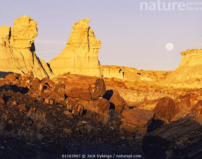 Petrified logs, Blue Mesa, Petrified Forest NP, Arizona, USA at sunset with full moon  ,  FOSSILS,LANDSCAPES,LOG,NORTH AMERICA,NP,RESERVE,ROCK FORMATIONS,USA,WOOD,Geology,National Park  ,  Jack Dykinga
