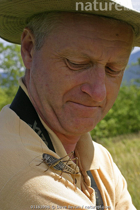 Wart Biter (Decticus verrucivorus) on shoulder of man, Hungry  ,  EUROPE, GRASSHOPPERS, HUNGRY, INSECTS, INVERTEBRATES, LONG-HORNED-GRASSHOPPERS, mixed species, ORTHOPTERA, PEOPLE, VERTICAL,Concepts  ,  Dave Bevan