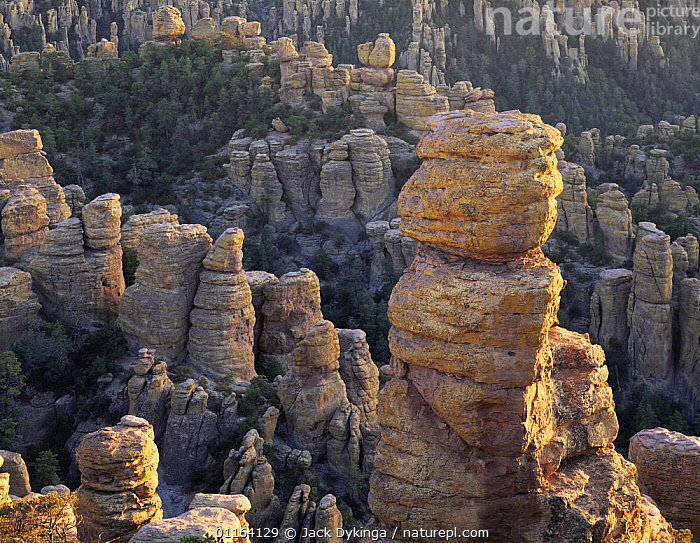 Rock spires in last rays of sunset, Echo Canyon, Chiricahua National Monument, Arizona, USA  ,  LANDSCAPES,NORTH AMERICA,RESERVE,ROCK FORMATIONS,USA,Geology  ,  Jack Dykinga