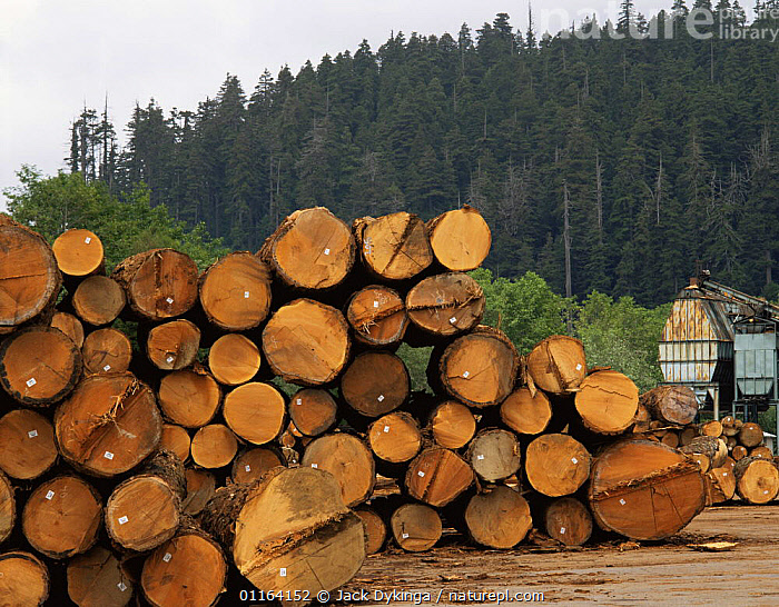 Timber from felled old growth Redwood trees, Arcata Redwood Company Mill, Redwood National Park, California, USA  ,  FORESTRY,LANDSCAPES,LOGS,NORTH AMERICA,NP,RESERVE,TREES,USA,Plants,National Park  ,  Jack Dykinga