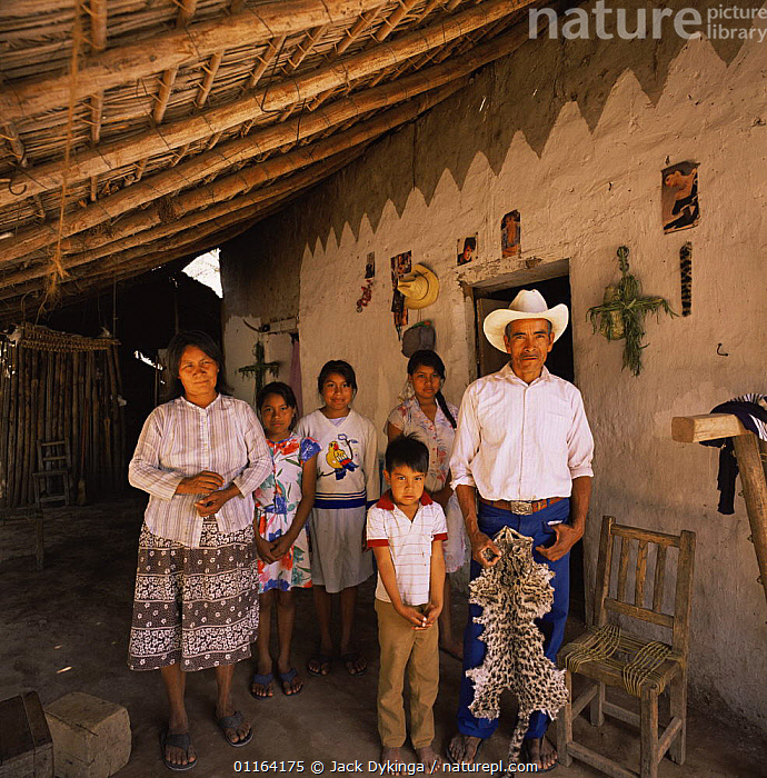 Family with Ocelot pelt, nr Rio Cuchujaqui, Sierra Madre, Mexico  ,  BUILDINGS,CARNIVORES,CATS,CENTRAL AMERICA,FAMILIES,HUNTING,MAMMALS,MEXICO,PEOPLE,RESERVE,SKIN,SKINS,CENTRAL-AMERICA  ,  Jack Dykinga