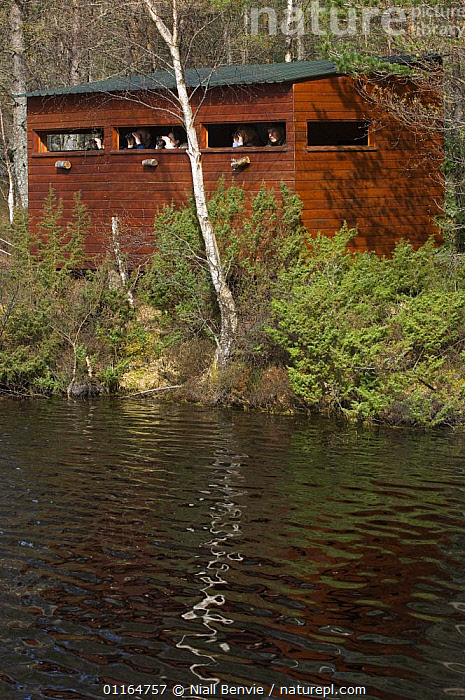 People watching from beaver-hide for beavers at reintroduction site, Aigas, Scotland UK, May 2006, BEAVERS,CONSERVATION,EUROPE,hides,LAKES,MAMMALS,reintroductions,rodents,VERTEBRATES,VERTICAL,WATER, Niall Benvie
