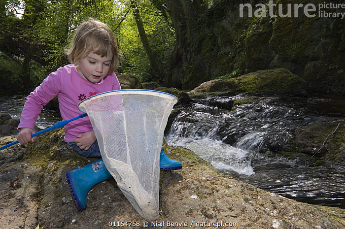 Young girl with fishing net beside river, Angus, Scotland UK. May 2006, CHILD,CHILDREN,EDUCATION,EUROPE,Fishing,LEISURE,OUTDOOR PURSUITS,PEOPLE,PRIMATES,RIVERS,SPRING,streams,UK,VERTEBRATES,WATER,WOODLANDS,United Kingdom,Mammals,British, Niall Benvie