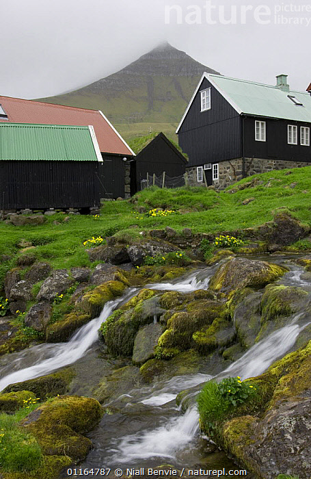 Stream flowing through Gjogv with misty mountain in background, Faroe Islands, Denmark. June 2006, BUILDINGS,EUROPE,LANDSCAPES,MOUNTAINS,MOVEMENT,RIVERS,SCANDINAVIA,streams,SUMMER,VERTICAL,WATER, Scandinavia, Niall Benvie