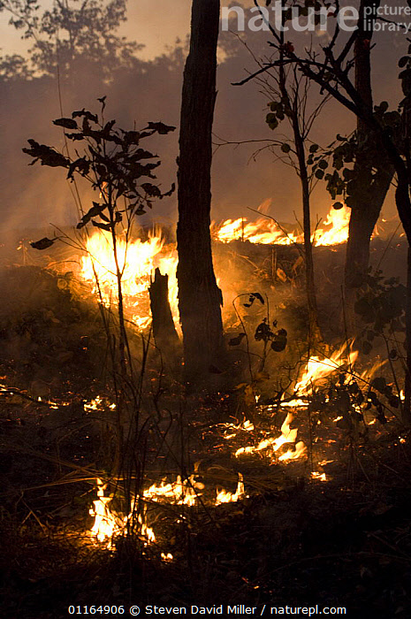 Controlled fires in Kakadu National Park, Northern Territory, Australia,  August 2006  ,  AUSTRALASIA,AUSTRALIA,BURNING,FIRE,MANAGEMENT,VERTICAL,WOODLANDS  ,  Steven David Miller