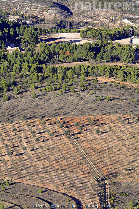 Aerial view of  field planted with trees, Alcoy, Alicante, Spain  ,  AERIALS,AGRICULTURE,EUROPE,FARMLAND,LANDSCAPES,VERTICAL  ,  Jose B. Ruiz