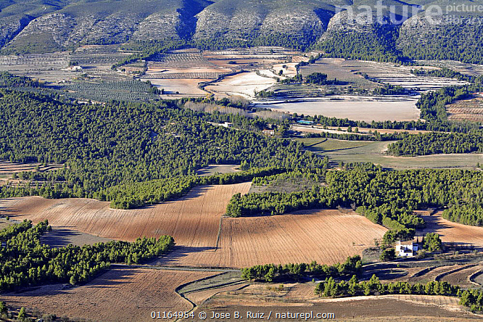 Aerial view of farmed landscape, Alcoy, Alicante, Spain  ,  AERIALS,EUROPE,FARMLAND,LANDSCAPES,WOODLAND  ,  Jose B. Ruiz