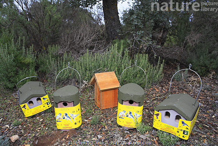 Collection of bird houses and nest boxes, Spain, BIRDS,CONSERVATION,EUROPE,NESTS, Jose B. Ruiz