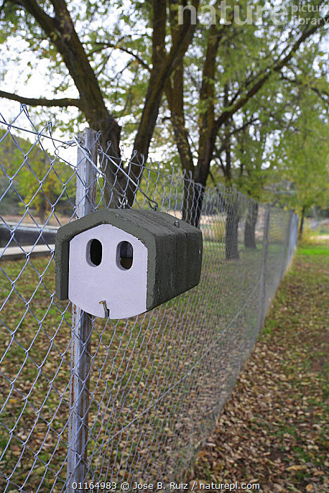 Nest box attached to fence, Spain, CONSERVATION,EUROPE,VERTICAL, Jose B. Ruiz