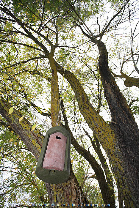 Bird house / nest box hanging from tree, Spain, BIRDS,CONSERVATION,EUROPE,TREES,VERTICAL,Plants, Jose B. Ruiz