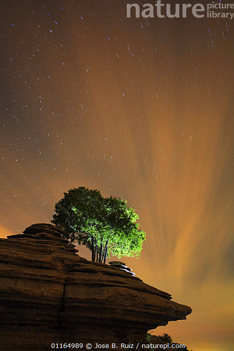 Tree growing on rock formation with night sky, Torcal de Antequera, Malaga, Spain  ,  ARTY,EUROPE,NIGHT,STARS,TREES,VERTICAL,Plants,Catalogue1  ,  Jose B. Ruiz