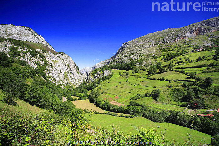 Valley landscape, Val de san Pedro, San Martin de Teverga, Asturias, Spain, EUROPE,FARMLAND,FIELDS,LANDSCAPES,PASTURE, Jose B. Ruiz