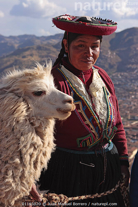 Indian woman wearing traditional dress and llama (Lama glama), Cusco, Peru 2006.  ,  ANDES,CULTURES,PEOPLE,PERU,PORTRAITS,SOUTH AMERICA,VERTICAL,SOUTH-AMERICA  ,  Juan Manuel Borrero