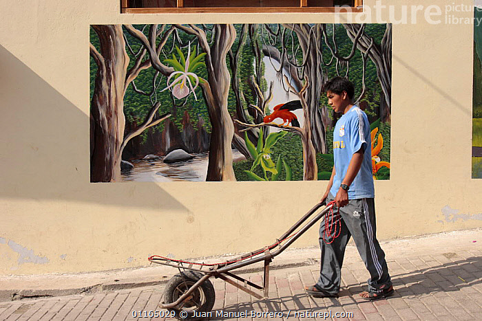Indian man pushing wheelbarrow along the street, with mural art showing rainforest scene, Aguas Calientes, Peru, 2006  ,  ANDES,PEOPLE,PERU,SOUTH AMERICA,SOUTH-AMERICA  ,  Juan Manuel Borrero