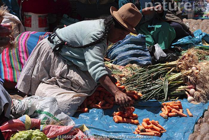 Woman with hat selling carrots in market, Pisac, Sacred Valley, Peru 2006.  ,  ANDES,PEOPLE,SOUTH AMERICA,TRADE,VEGETABLES,SOUTH-AMERICA  ,  Juan Manuel Borrero