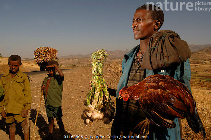 Amara man selling garlic and chicken beside road, North Ethiopia, 2006  ,  DESERTS,EAST AFRICA,HEN,MEN,PEOPLE,POULTRY,TRADE,TRIBES,VEGETABLES,Africa,EAST-AFRICA,Catalogue1F  ,  Laurent Geslin