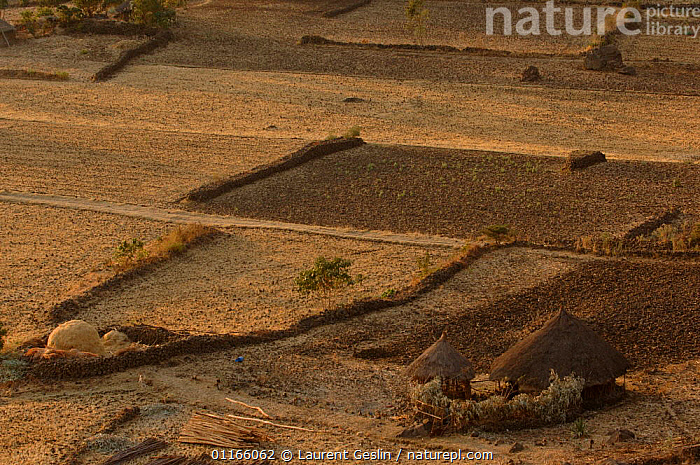 Agricultural landscape with traditional thatched huts, Oromoland, Omo valley, Ethiopia  ,  AGRICULTURE,BUILDINGS,CROPS,EAST AFRICA,LANDSCAPES,Africa,EAST-AFRICA  ,  Laurent Geslin