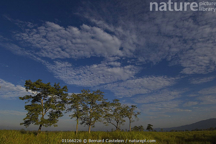 Scenery in Kaziranga NP,  Assam, India. 2005  ,  ASIA,CLOUDS,INDIA,INDIAN SUBCONTINENT,LANDSCAPES,RESERVE,SKIES,Weather,INDIAN-SUBCONTINENT  ,  Bernard Castelein