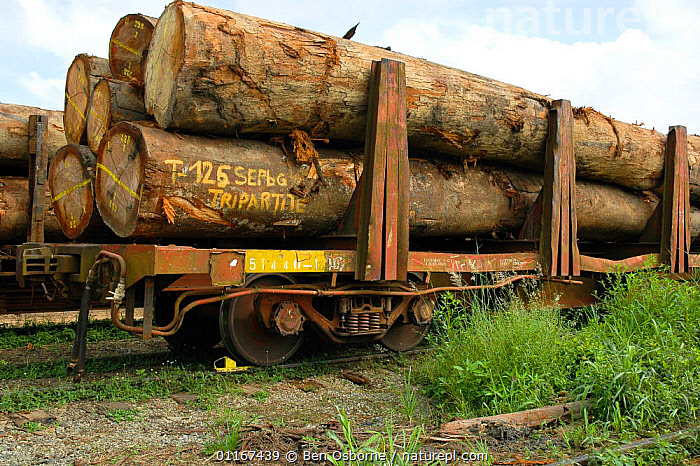 Tropical hardwood timber loaded onto railway wagons for transporting to the coast (for shipping or processing), Nr Lope forest, Gabon, 2004  ,  DEFORESTATION,LOGS,RAILWAYS,TIMBER,TRANSPORT,CENTRAL AFRICA,Africa,WEST-AFRICA  ,  Ben Osborne