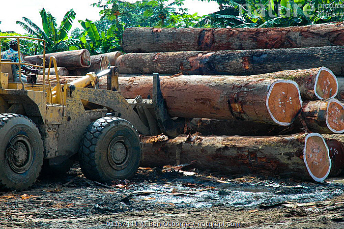 Tropical hardwood timber ready to be loaded onto railway wagons for transporting to the coast (for shipping or processing), Nr Lope forest, Gabon, 2004  ,  DEFORESTATION,LOGS,PEOPLE,TIMBER,VEHICLES,CENTRAL AFRICA,Africa,WEST-AFRICA  ,  Ben Osborne