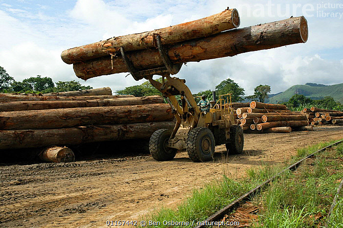 Tropical hardwood timber being loaded onto railway wagons for transporting to the coast (for shipping or processing), Nr Lope forest, Gabon, 2004  ,  DEFORESTATION,LOGS,TIMBER,TRANSPORT,TRUNKS,VEHICLES,CENTRAL AFRICA,Africa,WEST-AFRICA  ,  Ben Osborne