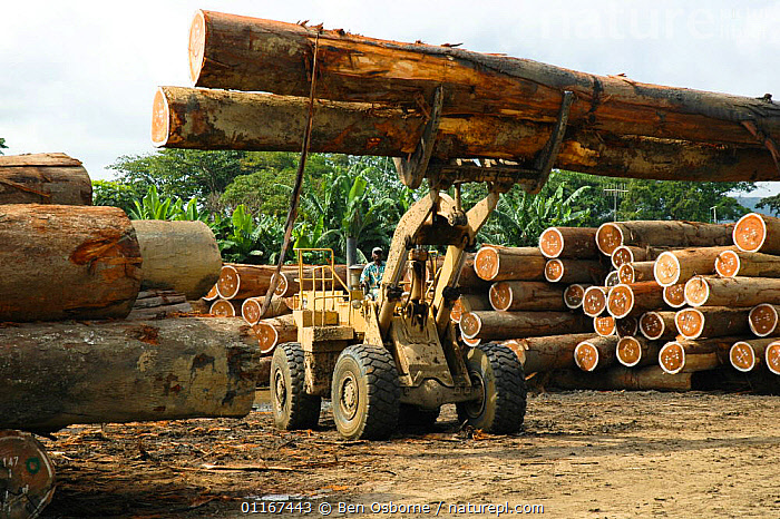 Tropical hardwood timber ready to be loaded onto railway wagons for transporting to the coast (for shipping or processing), Nr Lope forest, Gabon, 2004  ,  DEFORESTATION,LOGS,TIMBER,VEHICLES,CENTRAL AFRICA,Africa,WEST-AFRICA  ,  Ben Osborne
