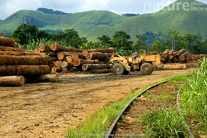Tropical hardwood timber ready to be loaded onto railway wagons for transporting to the coast (for shipping or processing), Nr Lope forest, Gabon, 2004  ,  DEFORESTATION,LANDSCAPES,LOGS,TIMBER,VEHICLES,CENTRAL AFRICA,Africa,WEST-AFRICA  ,  Ben Osborne