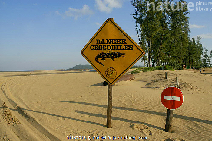 Crocodile warning sign on beach with Hippopotamus (Hippopotamus amphibius) lying on the beach, Santa Lucia estuary, Greater St Lucia Wetland Park, South Africa  ,  BEACHES,COASTS,HIPPO,LANDSCAPES,MAMMALS,RESERVE,SIGNS,SOUTHERN AFRICA  ,  Gabriel Rojo