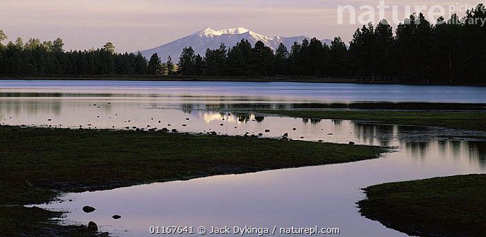Ponderosa Pines (Pinus ponderosa) silhouetted against the snow covered San Francisco Peaks, both reflected in Ashurst Run, dawn, Coconino National Forest, Arizona  ,  ARIZONA,LAKES,LANDSCAPES,MOUNTAINS,NORTH AMERICA,PANORAMICS,REFLECTIONS,SILHOUETTES,SUNRISE,USA  ,  Jack Dykinga