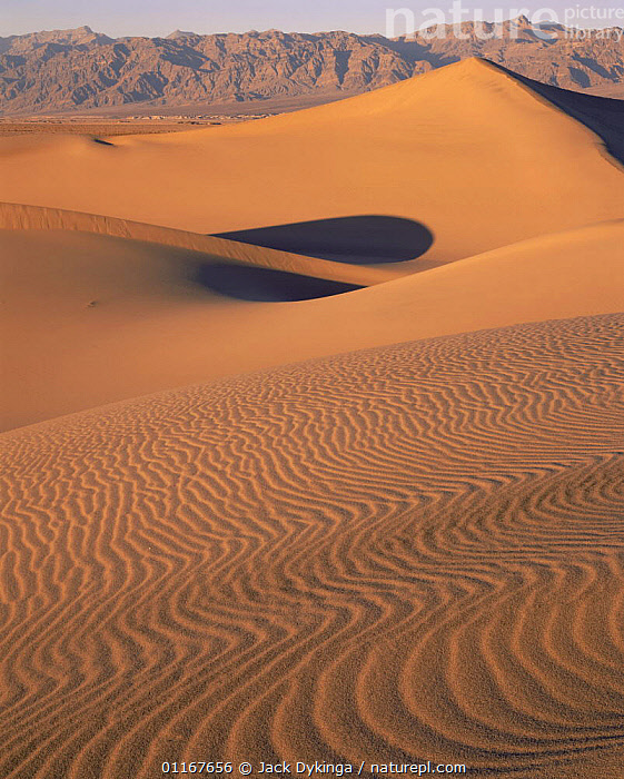 Ripples on sand dunes with Amargosa Mountains in background, Death Valley National Park, California  ,  Brown,California,DESERTS,dry,EROSION,LANDSCAPES,MOUNTAINS,north america,NORTH AMERICA,NP,USA,VERTICAL,WIND,YELLOW,National Park,Weather  ,  Jack Dykinga