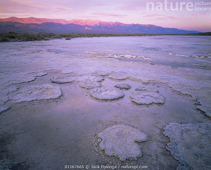 Salt formations on salt pan with Panamint Range lit by dawn light, Death Valley National Park, California  ,  California,dry,LAKES,LANDSCAPES,MOUNTAINS,NORTH AMERICA,NP,PATTERNS,SALT,SUNRISE,USA,National Park  ,  Jack Dykinga