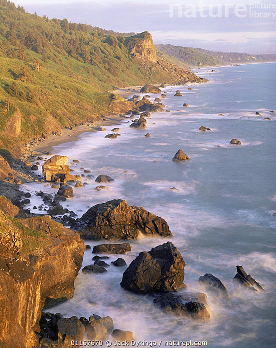 Coastline of Redwood National Park at sunset, California  ,  BEACHES,BLUR,CALIFORNIA,CLIFFS,COASTS,CONIFEROUS,EROSION,LANDSCAPES,NORTH AMERICA,NP,PACIFIC,PINES,SEA,TREES,USA,VERTICAL,Geology,Plants,National Park , blurred  ,  Jack Dykinga