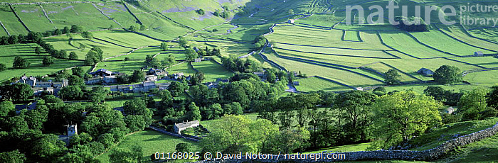 Arncliffe, Littondale, Yorkshire Dales, England, UK  ,  COUNTRYSIDE,FARMLAND,FIELDS,HILLSIDE,LANDSCAPES,PANORAMIC,TREES,VALLEYS,VILLAGES,Europe,Plants,ENGLAND  ,  David Noton