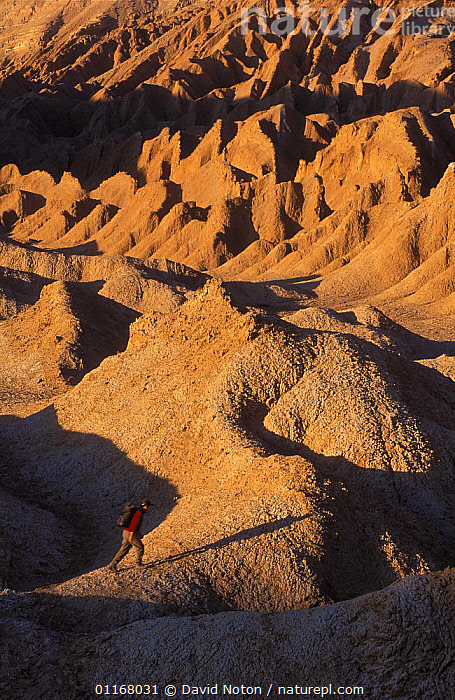 Solitary figure trekking in the desert, Atacama Desert, Chile  ,  DESERTS,ENVIRONMENT,HOT,LANDSCAPES,PEOPLE,ROCK FORMATIONS,SOUTH AMERICA,VERTICAL,Geology,SOUTH-AMERICA  ,  David Noton