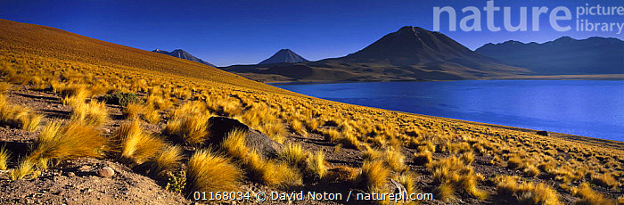 Laguna Miscanti, the Andes, northern Chile  ,  ANDES,LAKES,LANDSCAPES,MOUNTAINS,SOUTH AMERICA,WATER,SOUTH-AMERICA  ,  David Noton