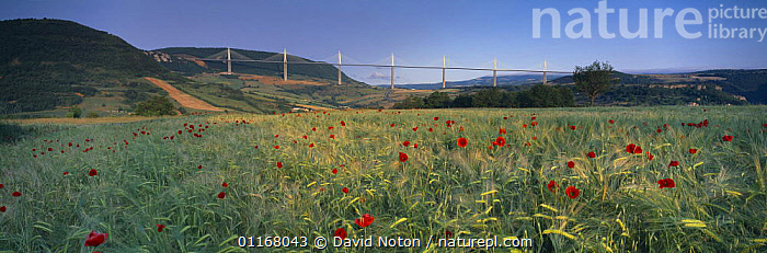 The viaduct of Millau spanning the Gorge du Tarn with poppies in the fields, Aveyron, Midi-Pyr�n�es, France  ,  COUNTRYSIDE,EUROPE,FIELDS,FLOWERS,HILLS,LANDSCAPES,PANORAMIC,POPPIES,VIADUCTS  ,  David Noton