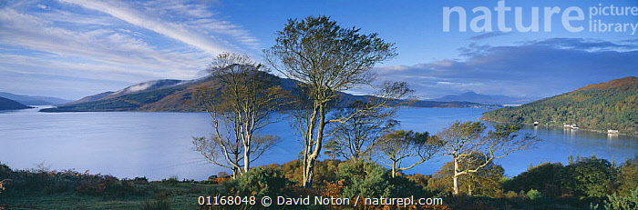 Loch Alsh, the sound of Sleat & the Isle of Skye from Balmacara, Wester Ross, Western Highlands, Scotland, UK  ,  CLOUDS,EUROPE,HILLS,LAKES,LANDSCAPES,PANORAMIC,TREES,UK,United Kingdom,Weather,Plants,British , Inner Hebrides  ,  David Noton