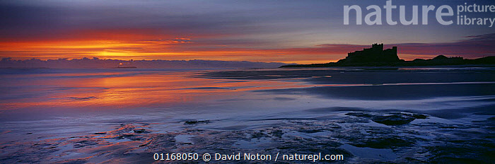 Dawn on the beach at Bamburgh Castle, Northumbria, England, UK  ,  ATMOSPHERIC,CASTLES,COASTS,EUROPE,LANDSCAPES,PANORAMIC,REFLECTIONS,SILHOUETTES,SUNSET,UK,United Kingdom,British,ENGLAND  ,  David Noton