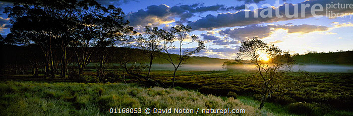 Dawn at Polblue Marsh, Barrington Tops National Park, New South Wales, Australia  ,  ATMOSPHERIC,AUSTRALIA,CLOUDS,COUNTRYSIDE,DAWN,HORIZONTAL,LANDSCAPES,MIST,NP,PANORAMIC,PEACEFUL,RURAL,SUN,SUNRISE,TREES,Concepts,Weather,Plants,National Park,Europe,WALES  ,  David Noton