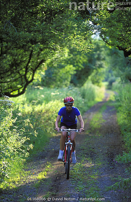 Woman on bicycle, Dorset, England, UK  ,  COUNTRYSIDE,CYCLING,EUROPE,LANDSCAPES,LEISURE,PEOPLE,ROADS,SPORT,TRACKS,TREES,UK,VERTICAL,United Kingdom,Plants,British,ENGLAND,SPORTS, United Kingdom, United Kingdom, United Kingdom  ,  David Noton